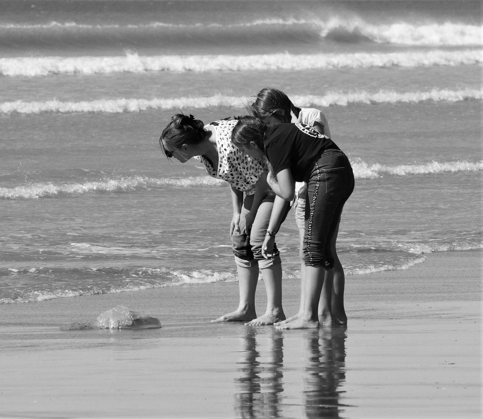 Septembre dans l'île d'Oléron. Album photos