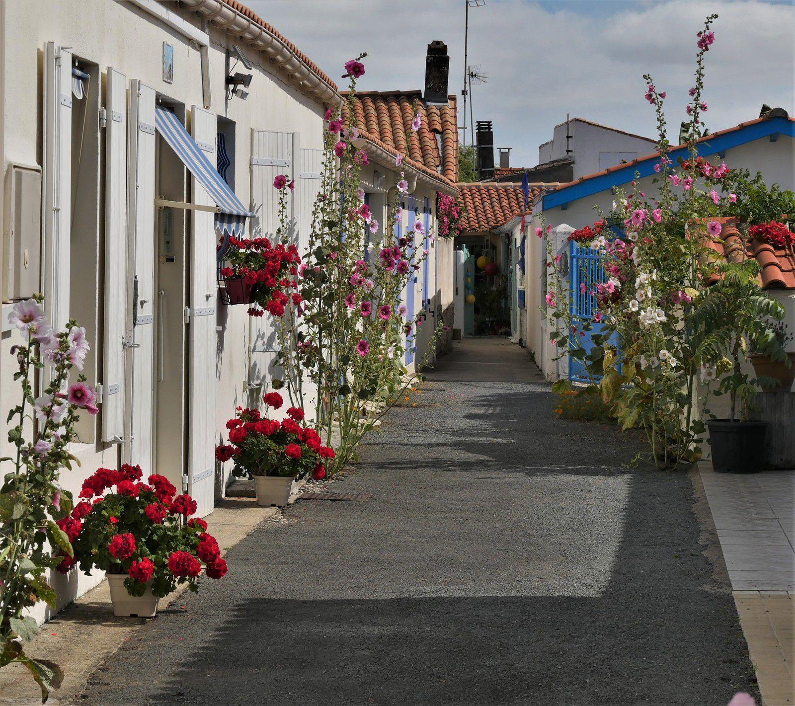Roses trémières d'Oléron. Juillet 2020. Photos et poème.