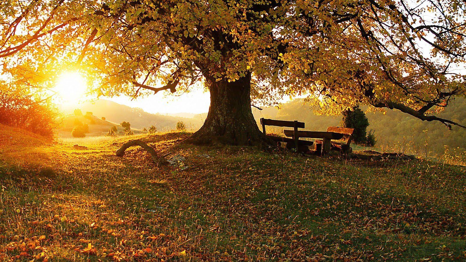 Magnifiques couleurs d'automne