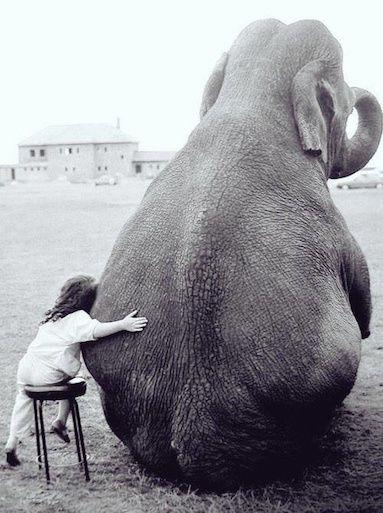 Que signifie votre rêve ? Éléphant