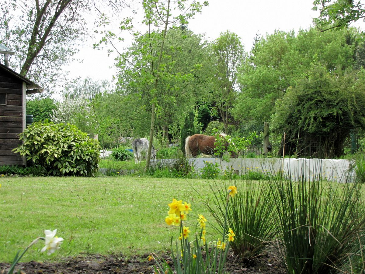 Hortillonnages d'Amiens, héron et canards