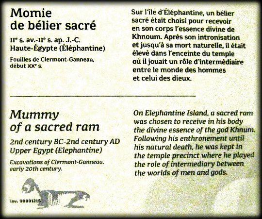 Chimère, momie de bélier sacré, musée des Confluences