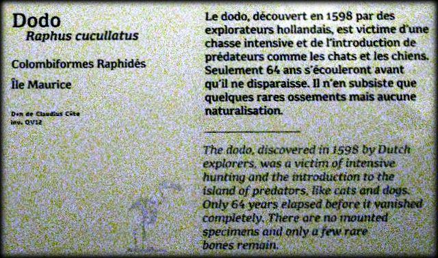 Aye-Aye (Madagascar), Dodo (Ile Maurice), Dugong (Australie) et Rhytine de Steller (Iles du Commandeur)