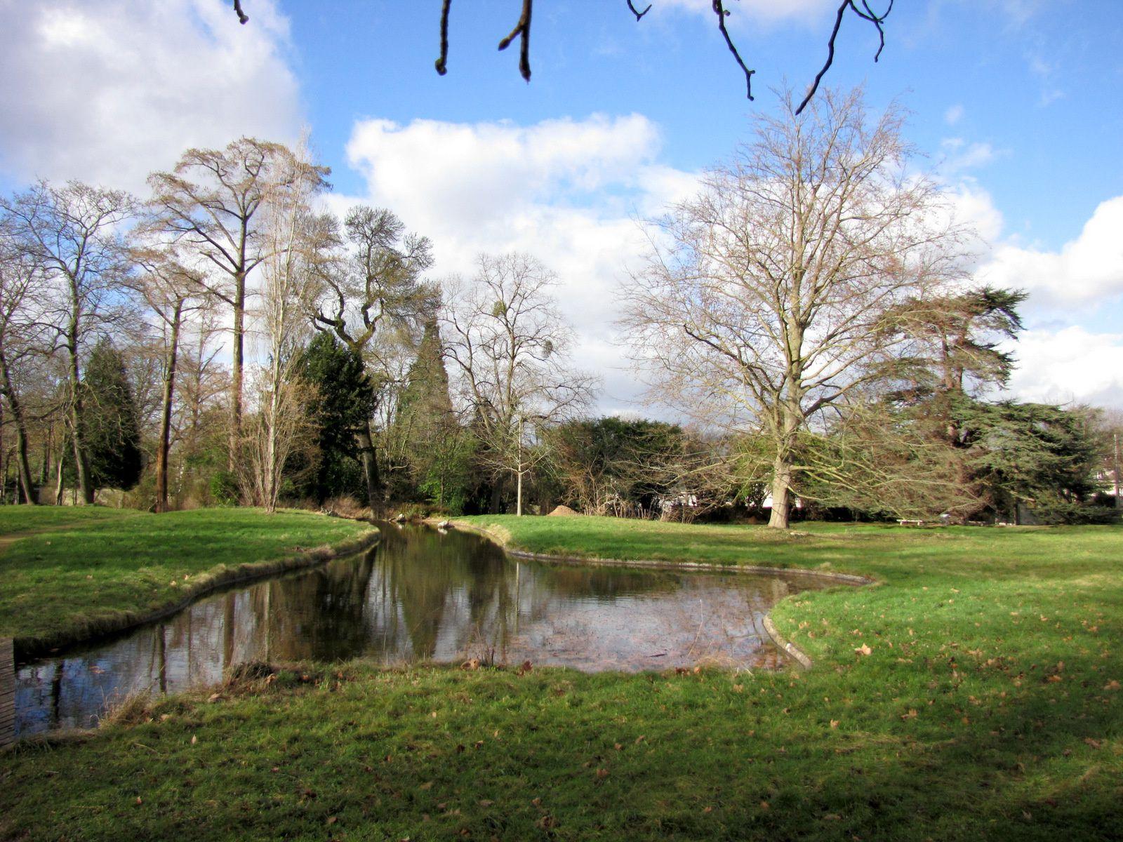 Cèdre de Marengo, parc de Malmaison