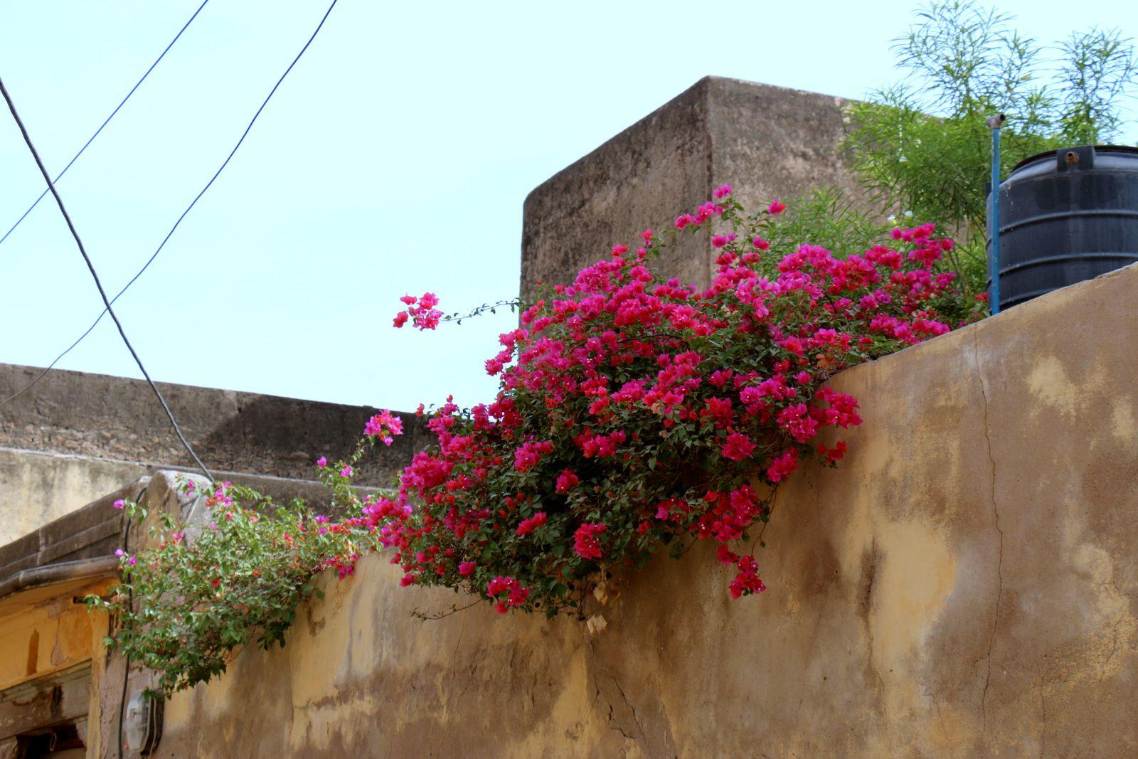 Haveli à Fatehpur, Inde (2/4)