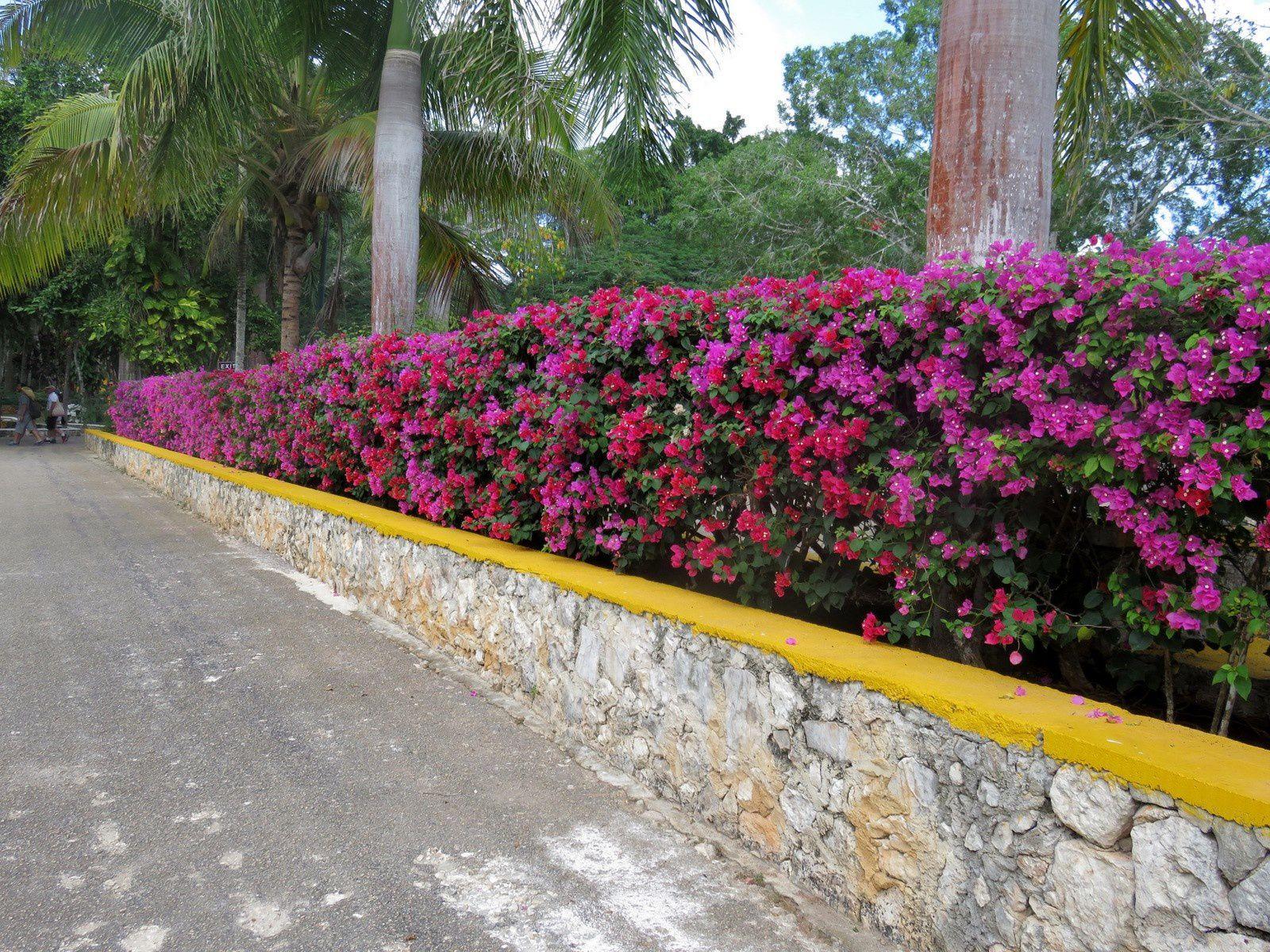 Cénote Ik Kil, province du Yucatan (Mexique)