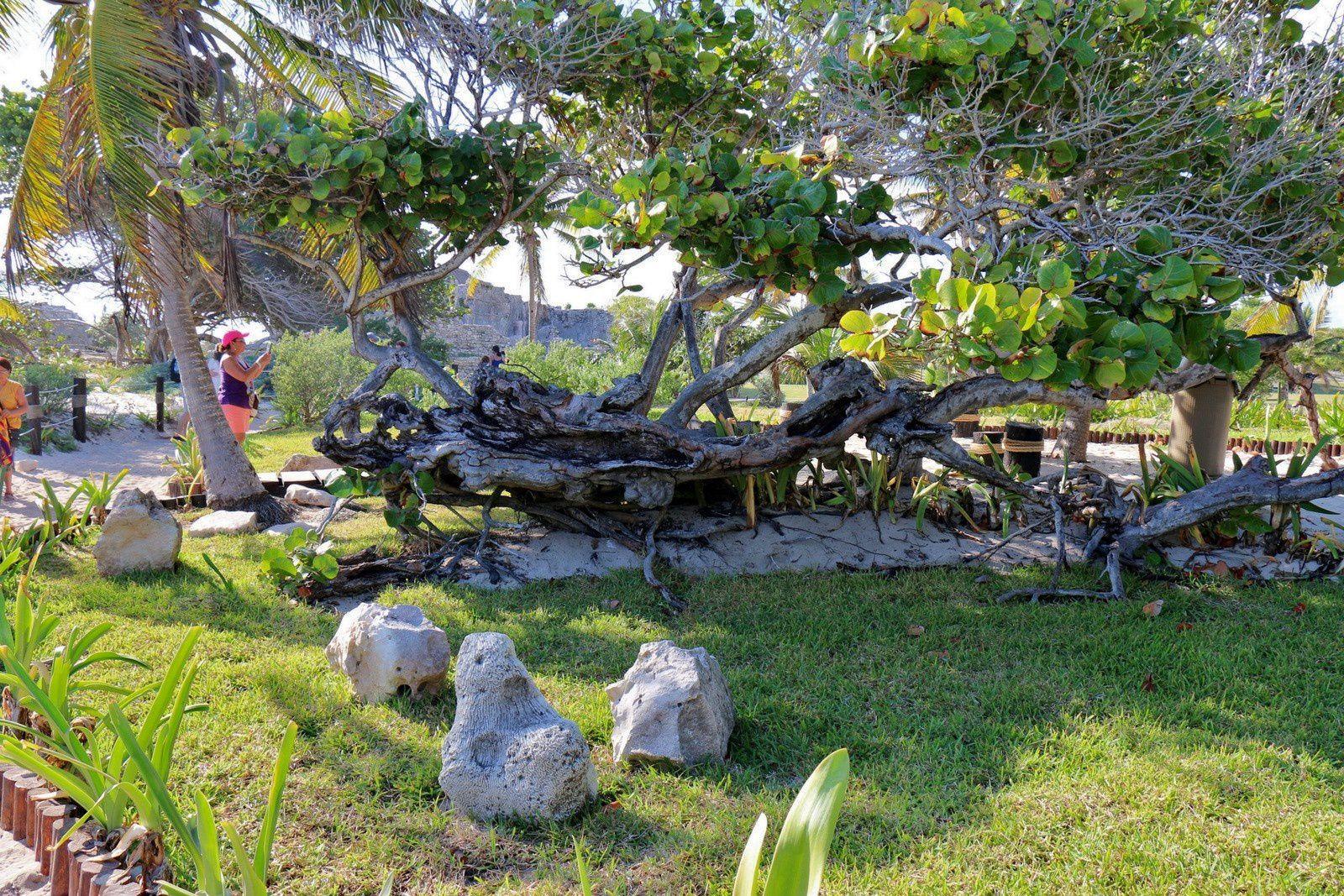 Espaces de repos, site archéologique de Tulum (Mexique)