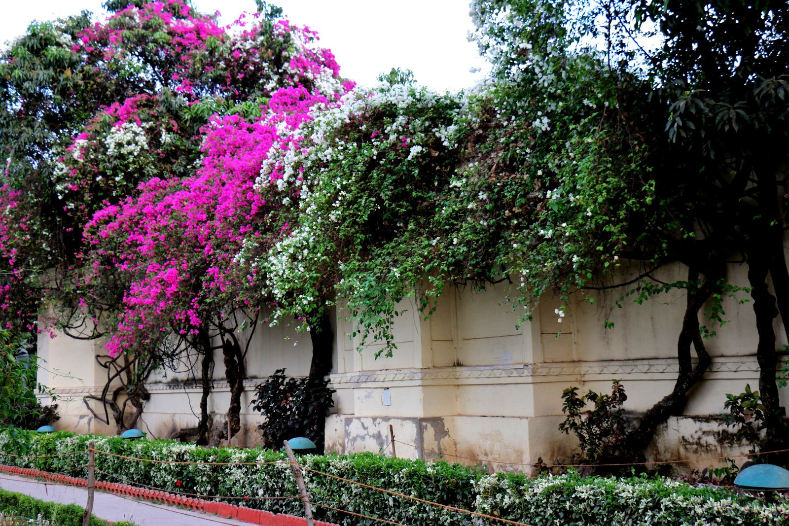 """Jardin """"Sahelion Ki Bari"""", Udaipur, Inde"""