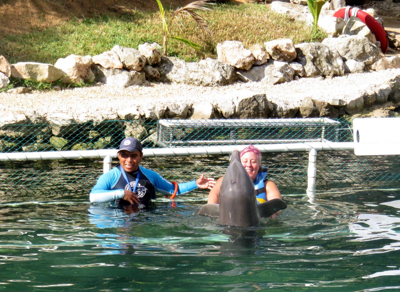 Puerto Aventuras (Mexique), dauphins et lamantins