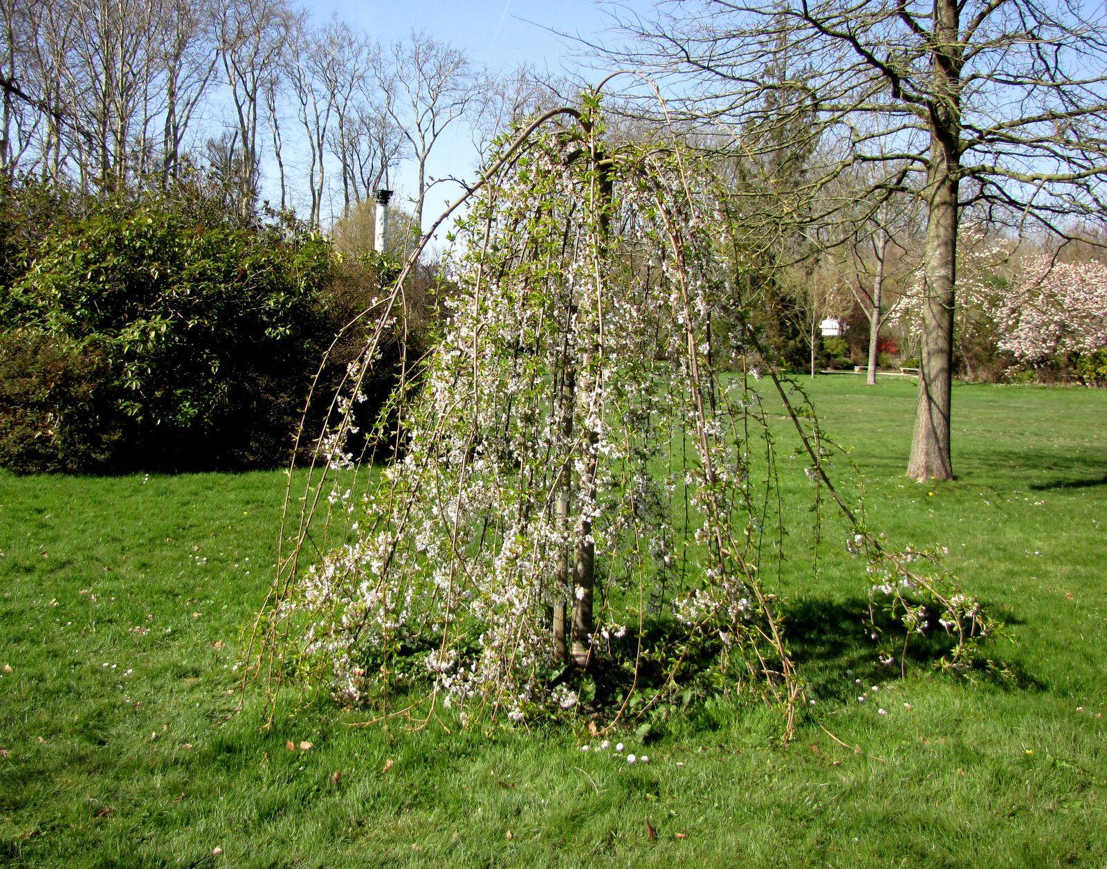Ivresse de Silène par Jean Rousselet, vase du jardin du roi (Parc de Versailles)