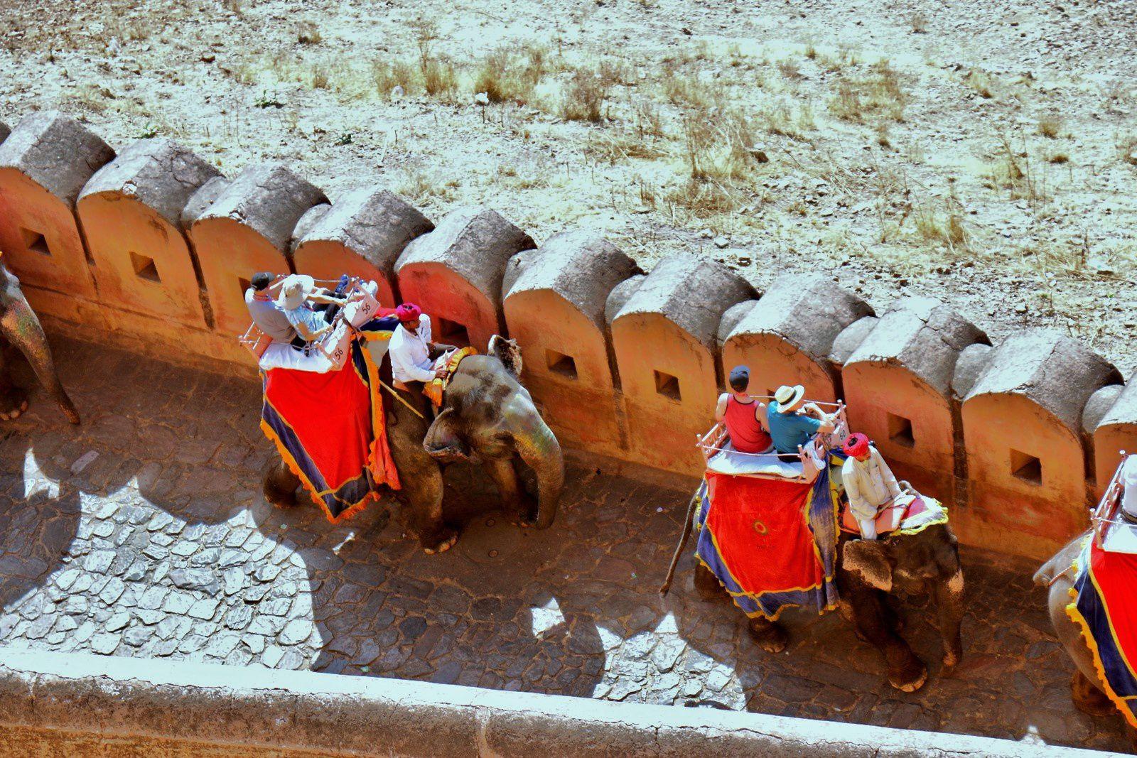 Convois d'éléphants au fort d'Amber, Rajasthan (Inde)