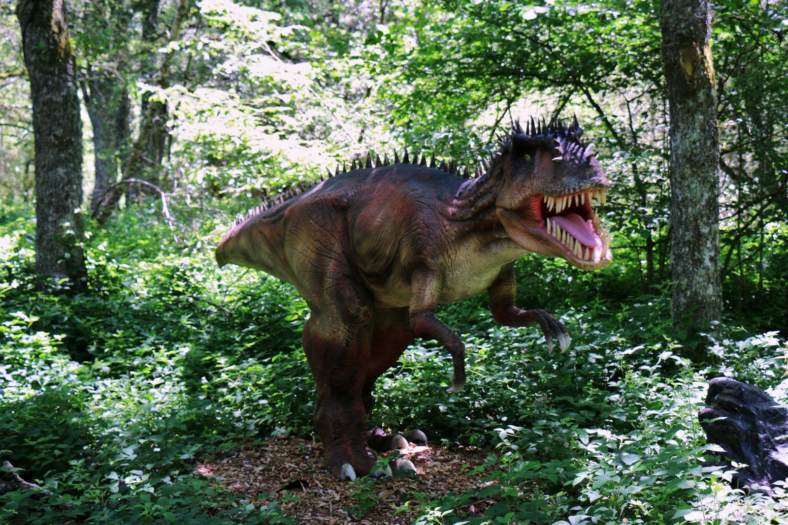 Diplodocus et Ceratosaurus, sur les traces des dinosaures