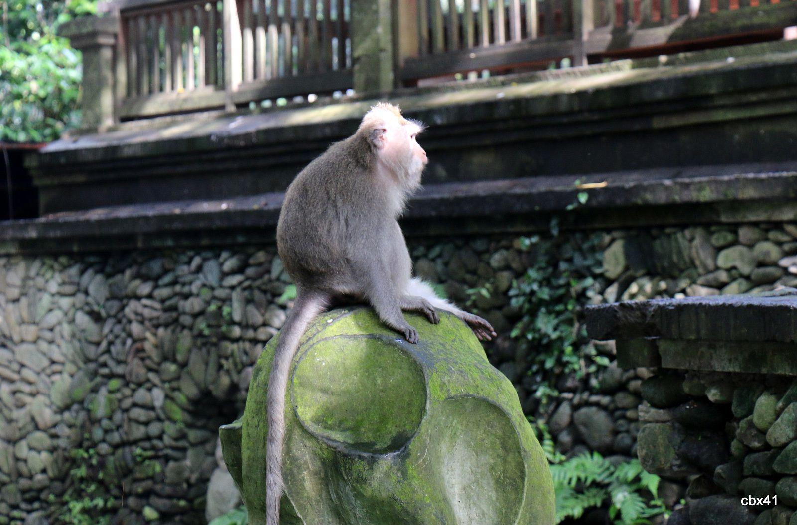 La forêt des singes_Monkey Forest,  Ubud (Bali, Indonésie)