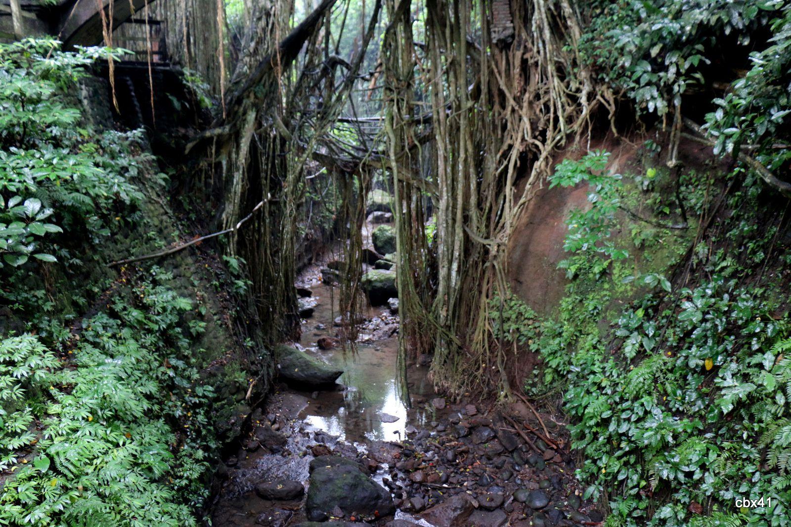 Balade dans la forêt des singes_Monkey Forest,  Ubud (Bali, Indonésie)