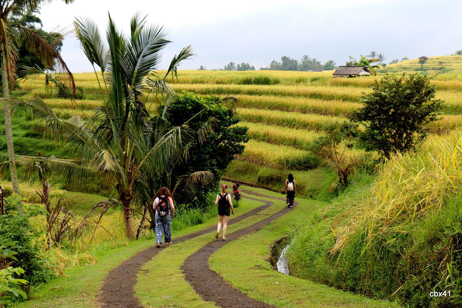 Touristes dans les rizières de Jatiluwih (Bali, Indonésie)