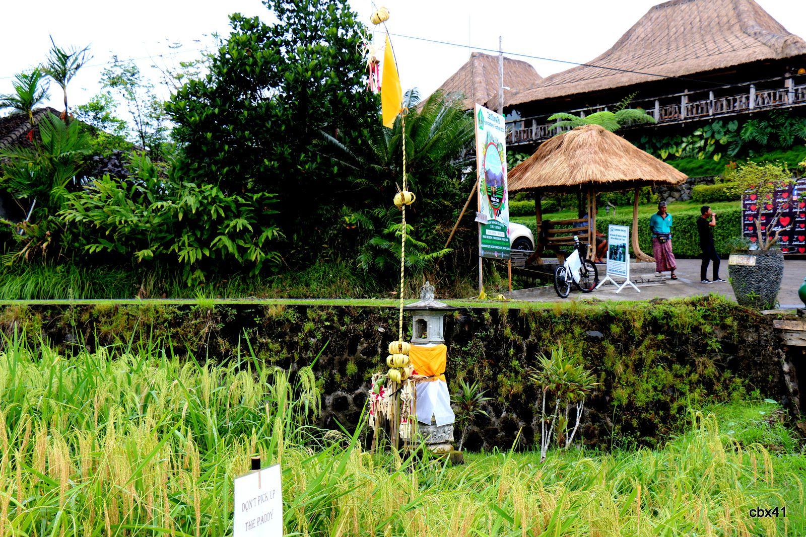 Autels dans les rizières de Jatiluwih (Bali, Indonésie)