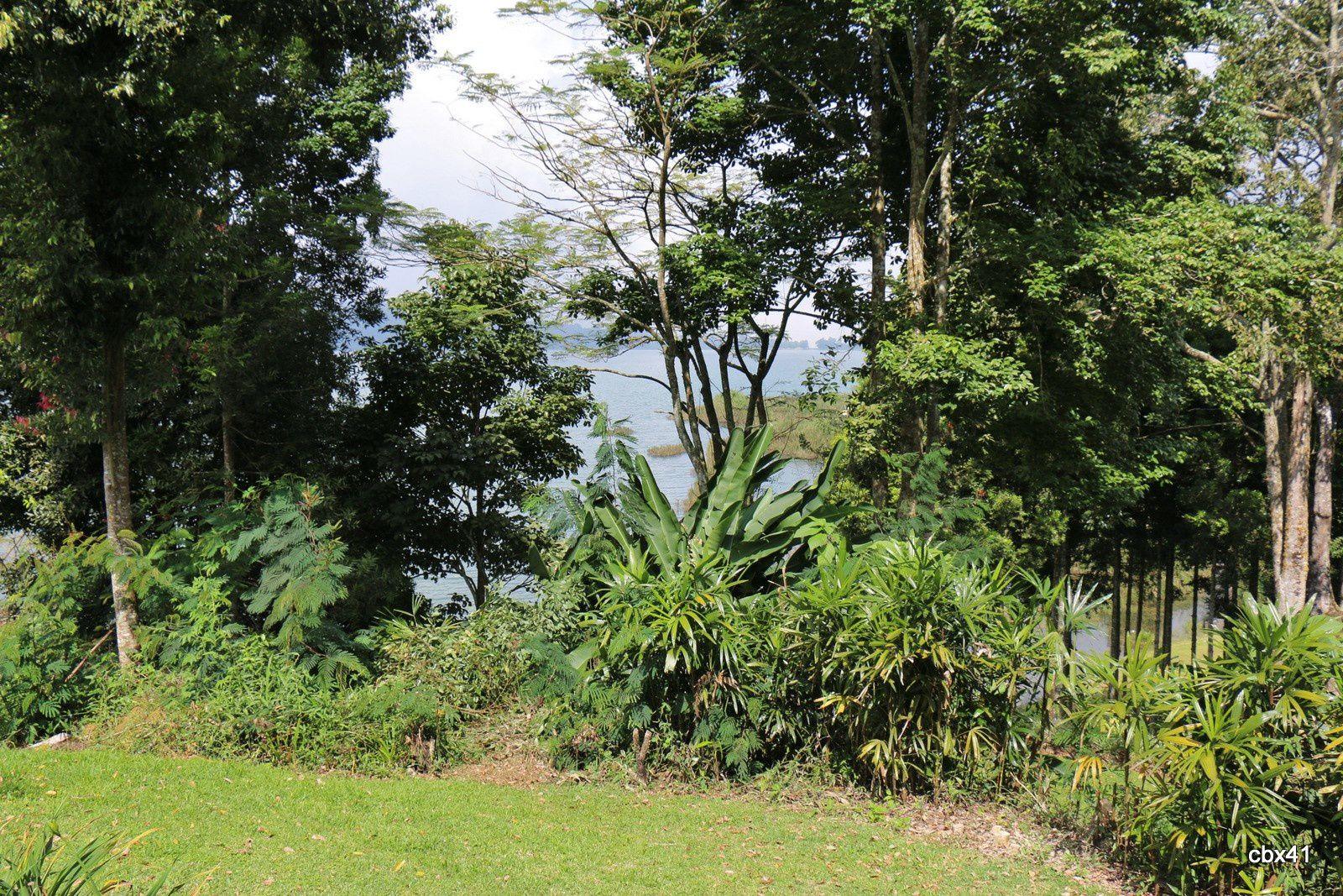 Villa Puri Candikuning (Bali), espace végétal et anthuriums