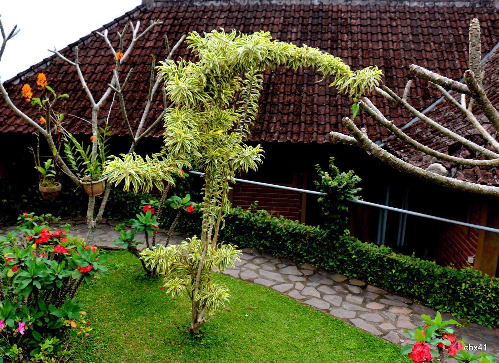 Taman Puri (Bali), succulentes et autres