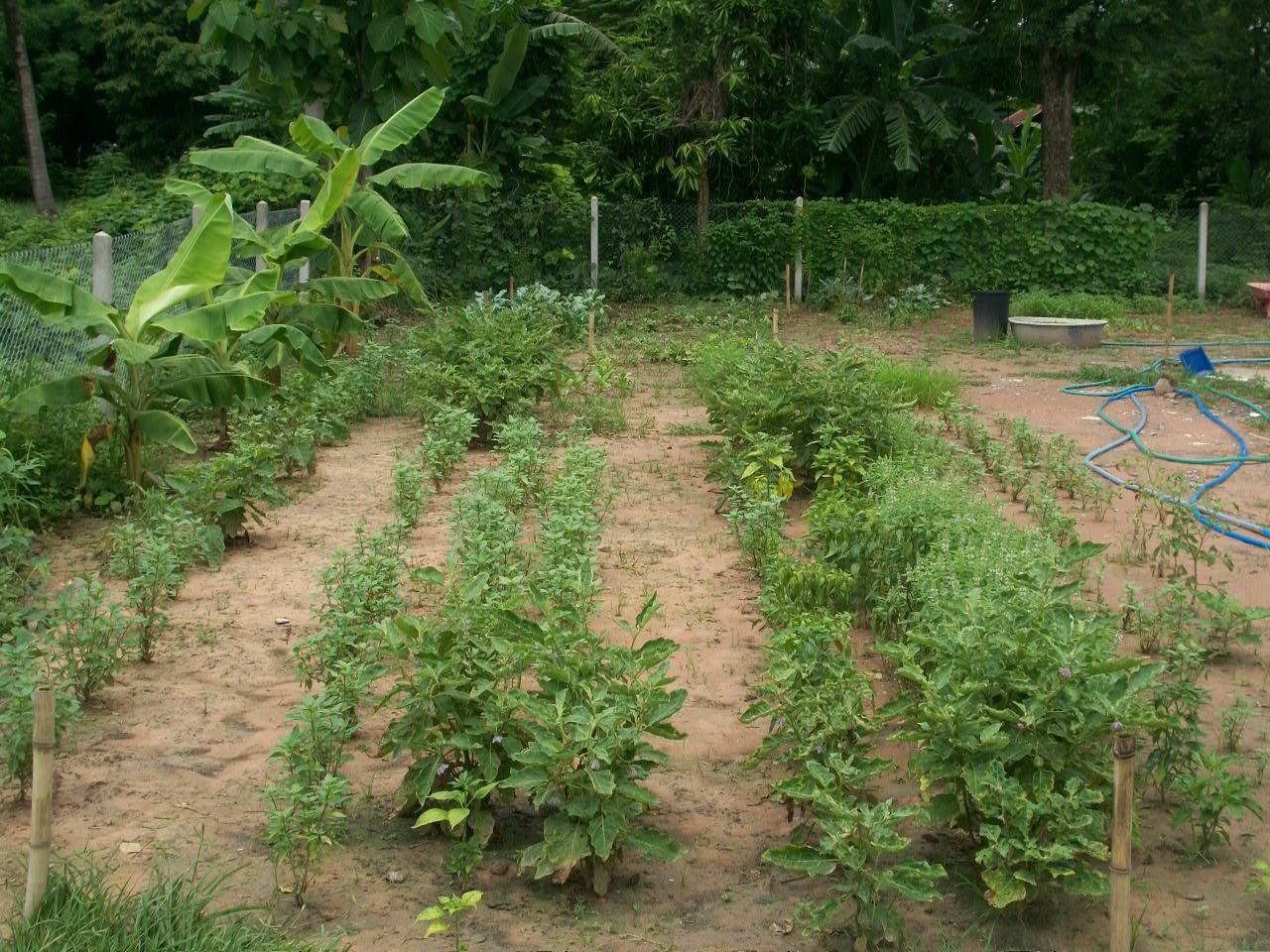 Notre jardin au 8 juin
