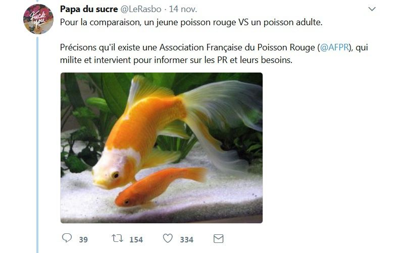 [Thread] Les poissons rouges