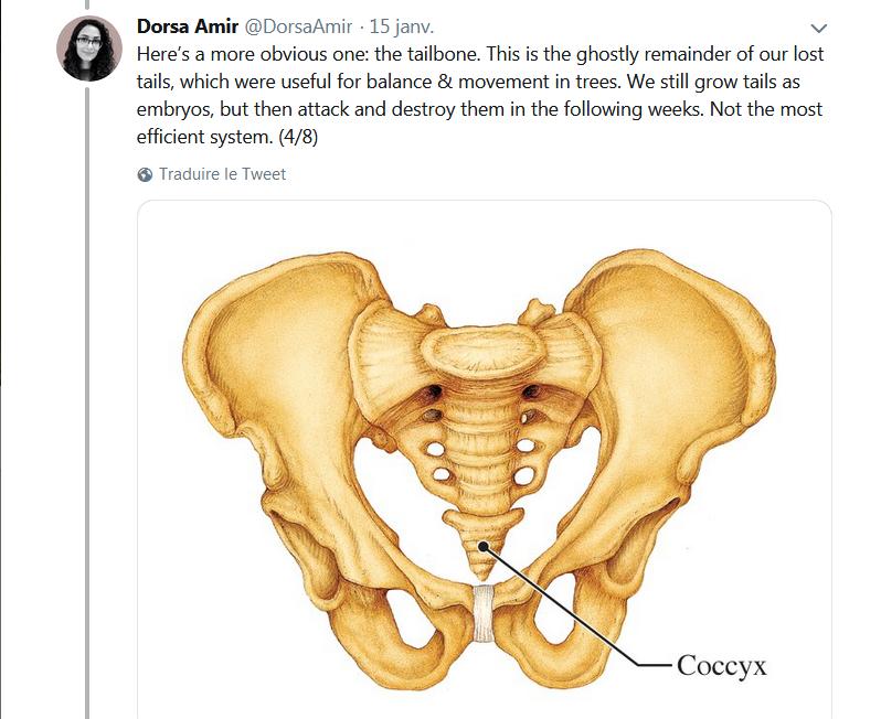 Votre corps est fondamentalement un musée d'histoire naturelle!