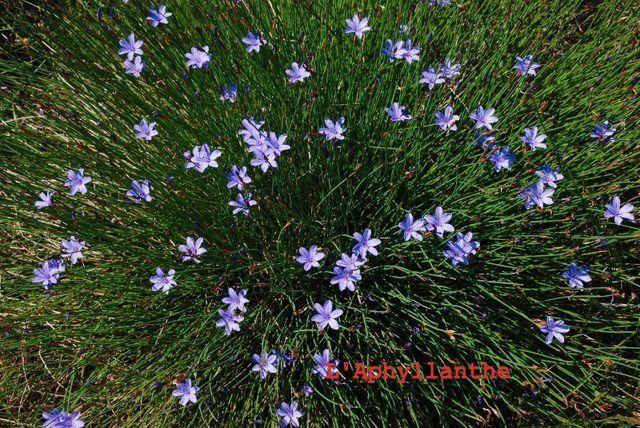 Cette riche et merveilleuse flore qui nous entoure