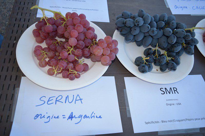Le raisin à l'honneur à la halle des producteurs