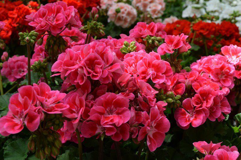 Les floralies ont attiré beaucoup de monde