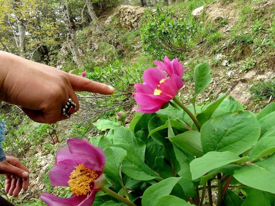 La flore du Djurdjura
