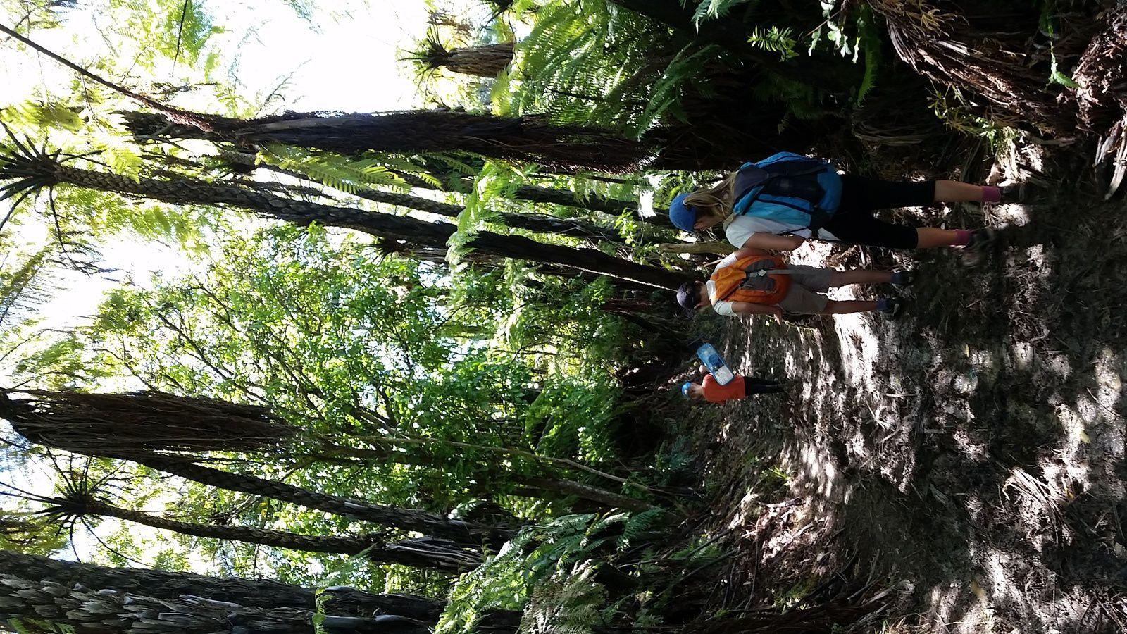 Randonnée sur la Queen Charlotte Track ~ Nouvelle Zélande