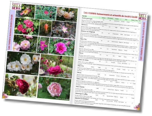Le catalogue Mela Rosa 2016-2017 est en ligne !