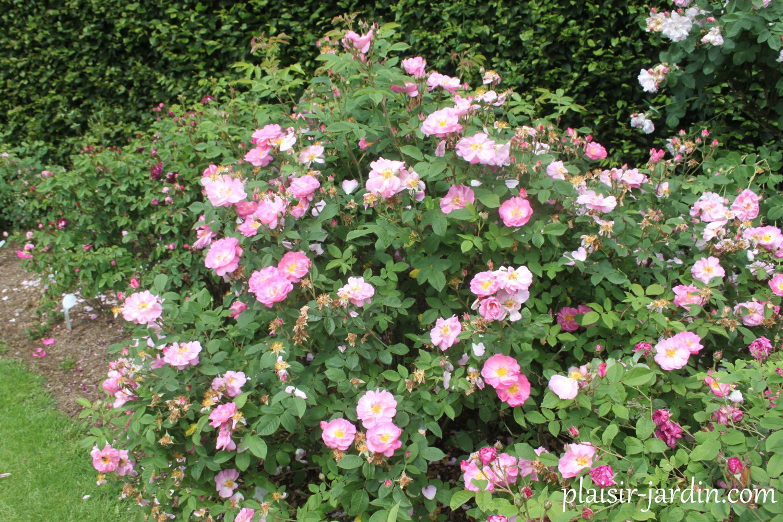rosier saint nicholas