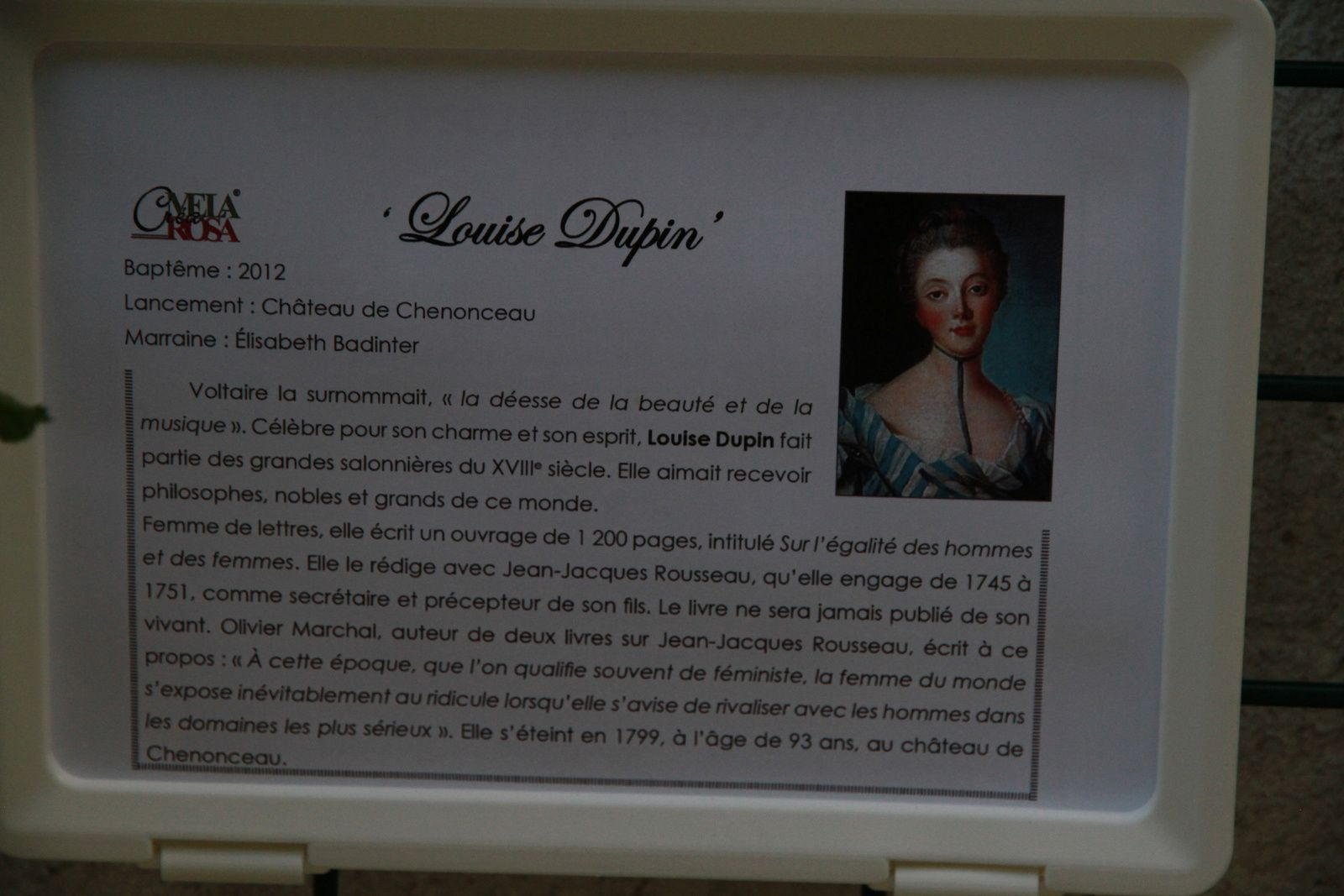 Le rosier 'Louise Dupin'