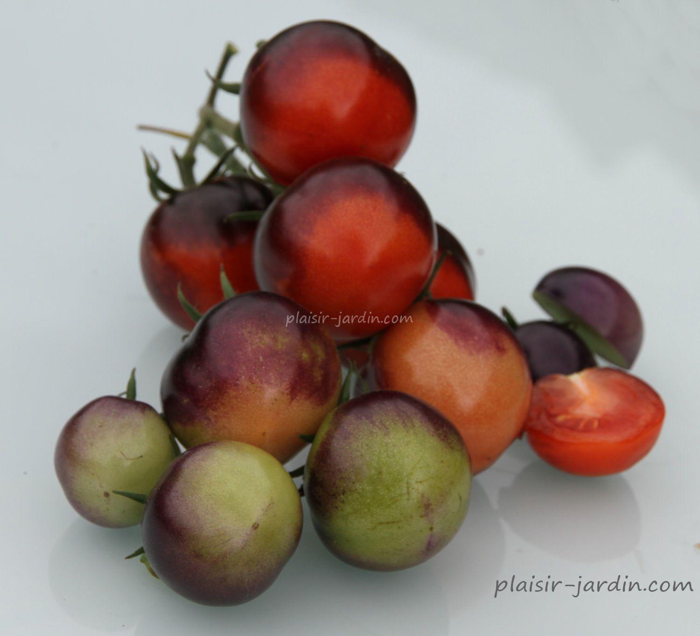 La tomate Blue Bayou