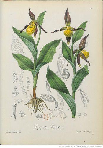 Orchidées Et Poésie Vebre09marseille Histoire Fleursetgraindesel