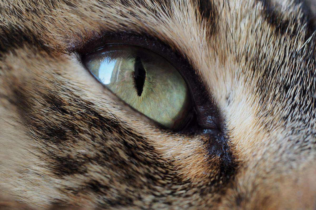 oeil de chat !
