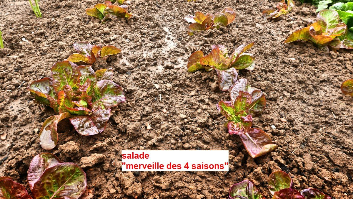 Le potager de Marie-Claire et Michel (01/03)