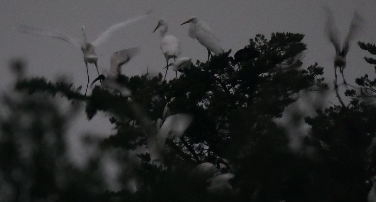 compter les oiseaux
