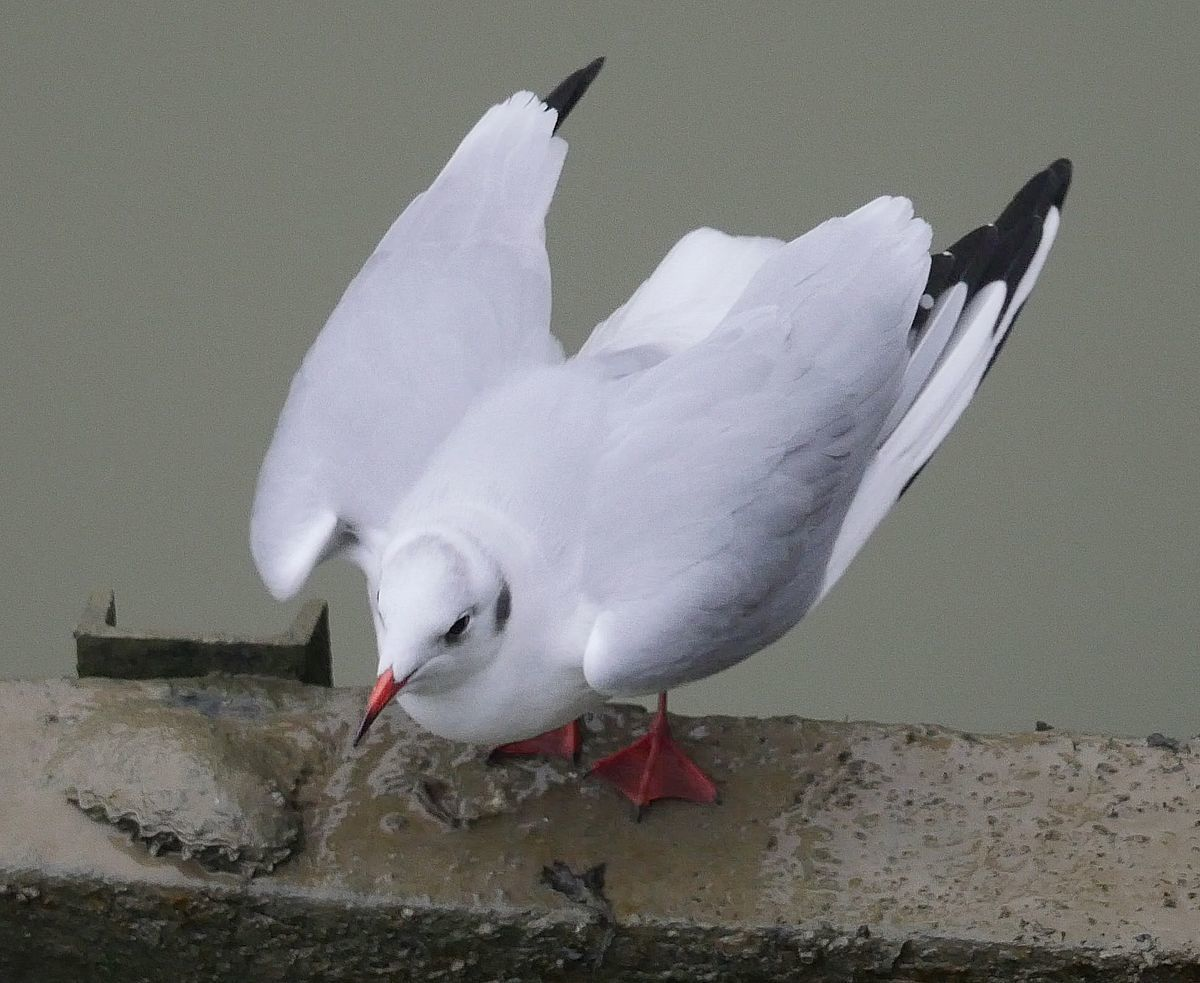 la playmouette du nouvel an