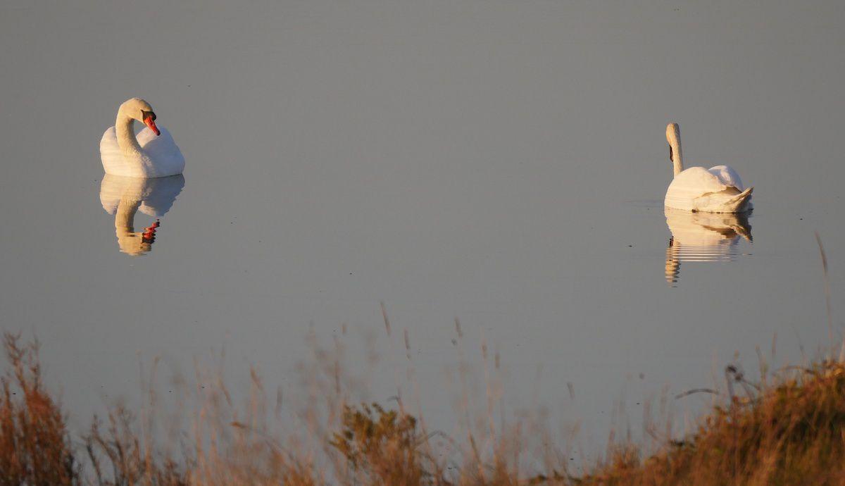 balade dans le marais Breton-Vendéen