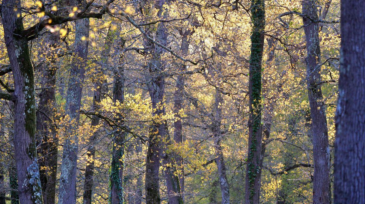Bois de Boulogne à Dax