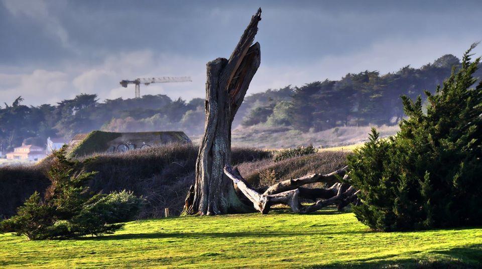 l'arbre de Portmain