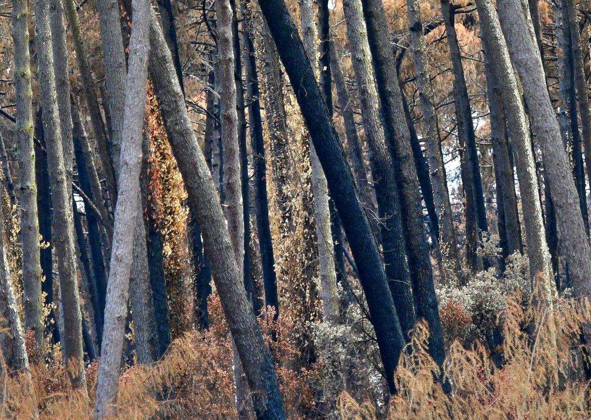 l'incendie de la forêt de Chiberta