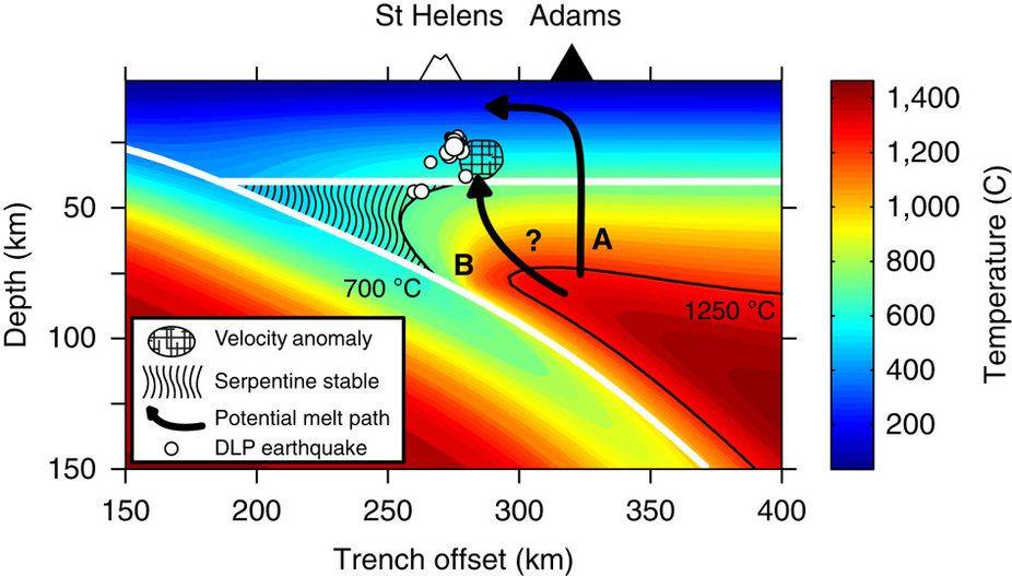 Modèle 2D thermique du système de subduction des Cascades dans le centre Oregon et interprétation géologique – la zone hachurée marque la région du coin du manteau où la serpentine est stable (vers 700°C). Les points blancs précisent la localisation des séismes de très longue périose (DLP). Les flèches montrent les deux voies possibles de migration latérale du magma vers le St Helens. - doc. in Seismic evidence for a cold serpentinized mantle wedge beneath Mount St Helens – S.M. Hansen, B.Schamandt & al.