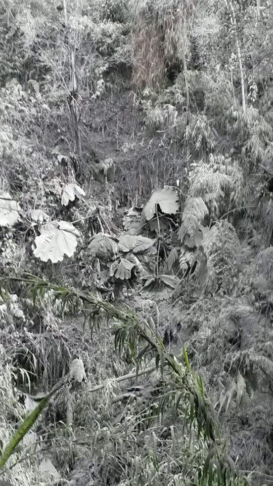 Turrialba - Végétation en gris et blanc sur les pentes du volcan - photo Volcan Turrialba Lodge