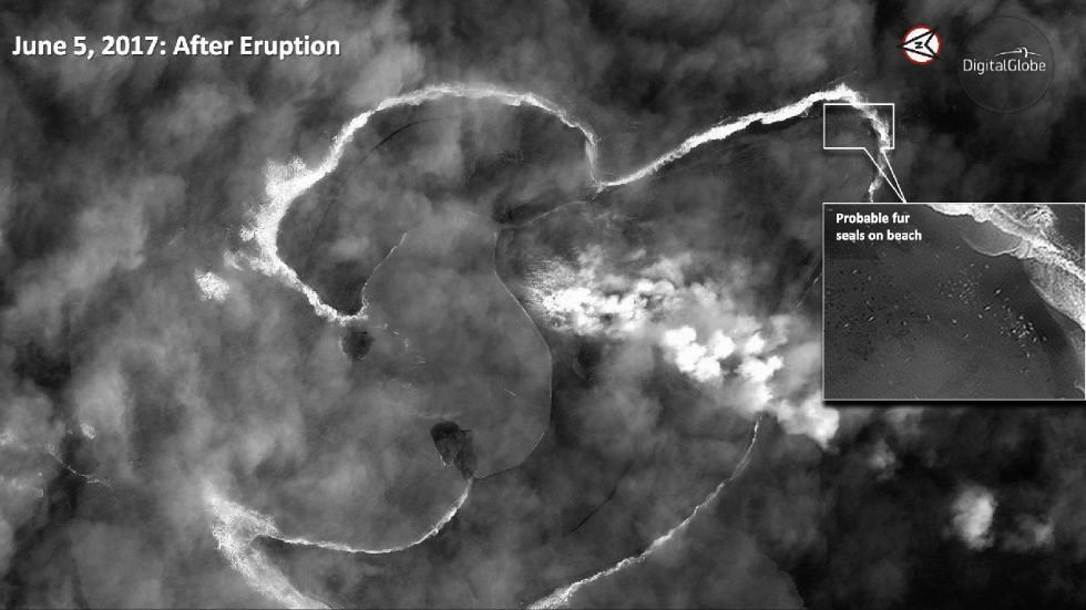 Bogoslof on June 5, 2017, after the strong eruption - the colony of fur seals is still present - photo Courtesy of Digital Globe