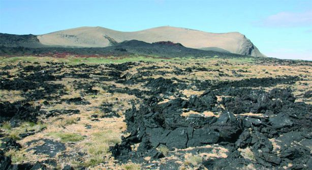 Surtsey - pioneer vegetation - photo Olafsson E.2012