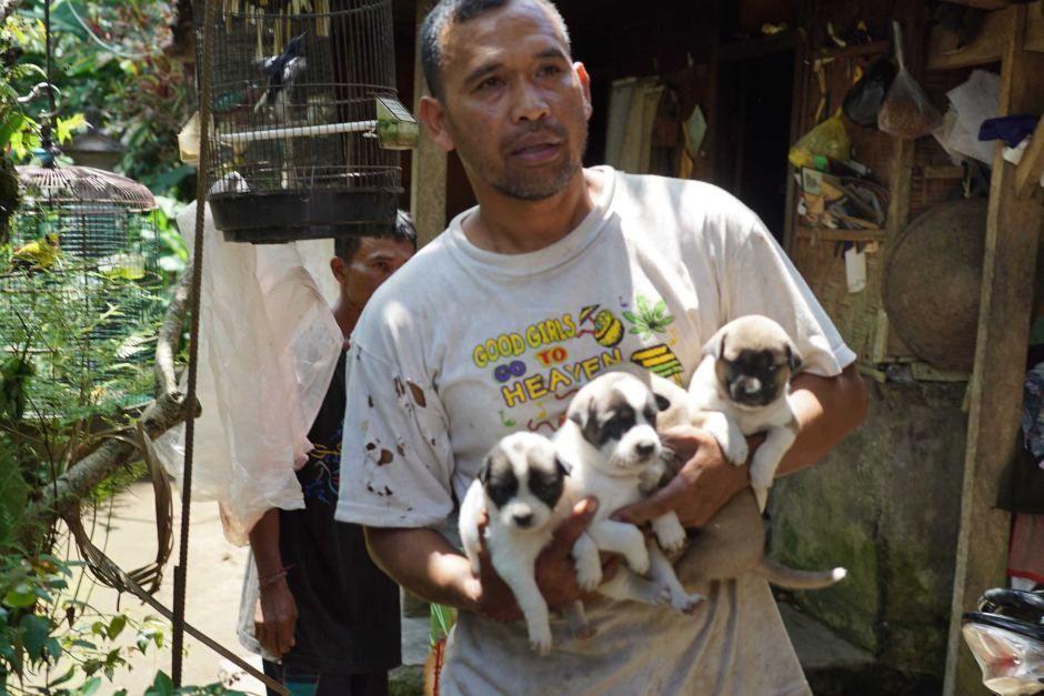 Un volontaire du BAWA recueille des chiots abandonnés dans la zone rouge de l'Agung -  photo  ABC News Archicco Guilianno