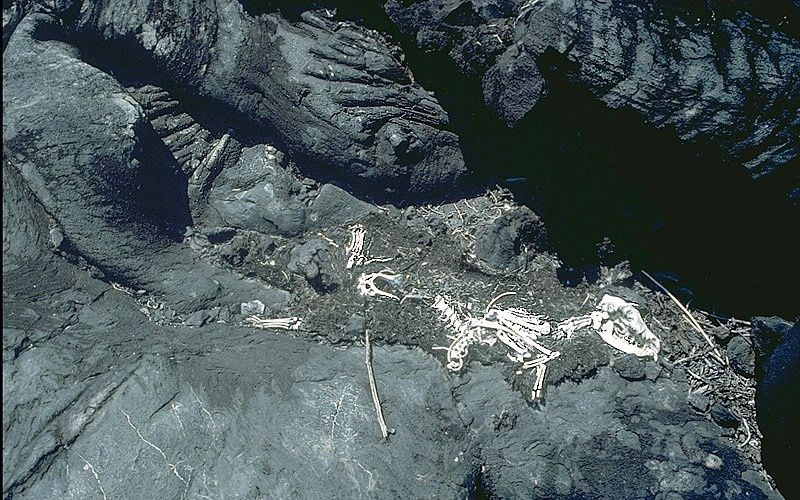 Skeleton of a dog found in a mazuku on the flanks of Nyamuragira / DRC - photo JP. Lockwood 1989 / USGS