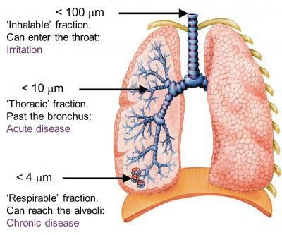 Pulmonary effects of volcanic ash as a function of the level of penetration into the respiratory tract - Doc USGS
